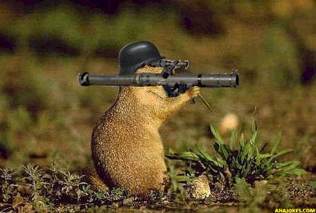 Military Groundhog