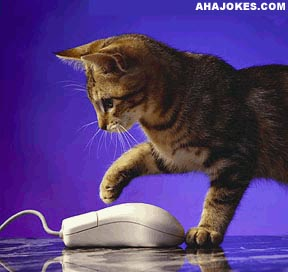 Cat got the mouse