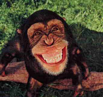 This monkey has a big smile