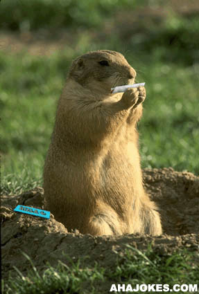 Smoking Prairie Dog